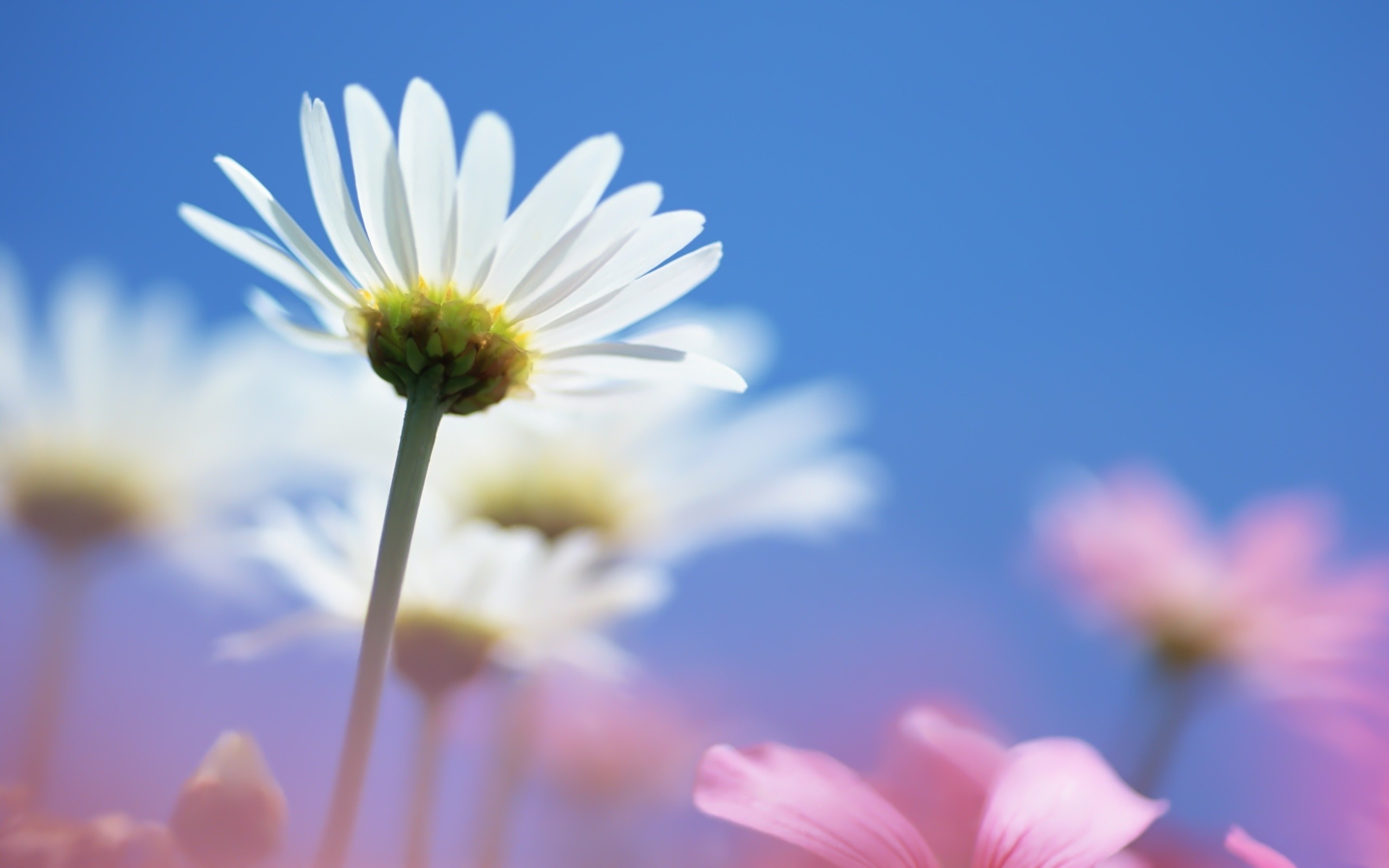Summer Daisy Flower The Riverdale Y